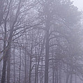 Fog In The Smoky Mountains by John Carroll