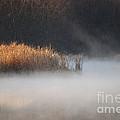 Fog Lifting by Joy Bradley