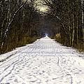 Fog On The Winter Macomb Orchard Trail by LeeAnn McLaneGoetz McLaneGoetzStudioLLCcom