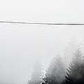 Fog by Rebecca Cozart