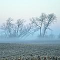 Fog Warriors by Dennis Stanton
