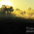 Fogged Up Sun by Ron  Tackett