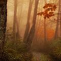 Foggy Autumn by Mary Jo Allen