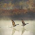 Foggy Autumn Morning by Elizabeth Winter