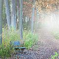 Foggy Autumn Morning by Sebastian Musial