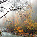 Foggy Autumn by Ron Day