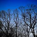 Foggy Blue Morning by Amy Cicconi
