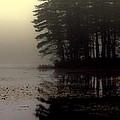 Foggy Bog Sunrise by Kenny Glotfelty