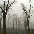 Foggy Cemetery Road by Gothicrow Images