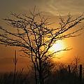 Foggy Crabapple Tree by Dale Kauzlaric