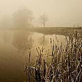 Foggy Day At Silver Lake by Judy  Johnson