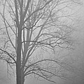Foggy Days by Trish Tritz