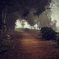 Foggy Dreams by John A Royston