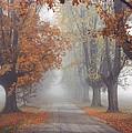 Foggy Driveway by Wendell Thompson