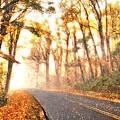 Foggy Fall Wonderland - Blue Ridge Parkway II by Dan Carmichael
