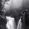Foggy Falls by Darren  White