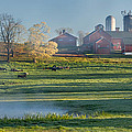Foggy Farm Morning by Bill Wakeley