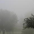 Foggy Fence by Dan Sproul
