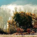 Foggy Frost by Anita Braconnier