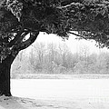 Foggy Icestorm by Sophie Vigneault