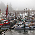 Foggy Ilwaco Port by Robert Bales