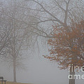 Foggy Lake View by James BO  Insogna