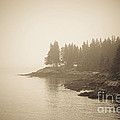Foggy Maine Coast by Diane Diederich