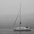 Foggy Maine by Pat Lucas