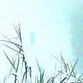 Foggy  Marsh Mornng by Lizi Beard-Ward