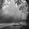 Foggy Morn At Dog Park by Patti Colston