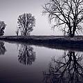Foggy Morn Bw by Steve Gadomski