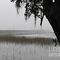 Foggy Morning by Dale Powell