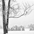 Foggy Morning Landscape - Fractalius 5 by Steve Ohlsen