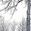 Foggy Morning Landscape - Fractalius 6 by Steve Ohlsen