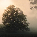 Foggy Morning by Norman Johnson