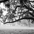 Foggy Morning On Coosaw Plantation by Scott Hansen
