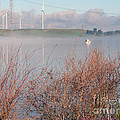 Foggy Morning On The Sacramento River by Afroditi Katsikis