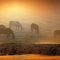 Foggy Morning Pasture Time by Andrea Lawrence