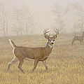 Foggy Morning-Whitetail by Paul Krapf