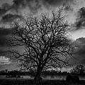 Foggy Mornings by Allen Gresham