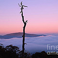Foggy Mountain Morning by Francie Davis