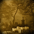 Foggy Necropolis by Gothicrow Images