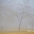 Foggy Park Morning by James BO Insogna