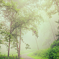 Foggy Path - Blue Ridge Parkway by Dan Carmichael