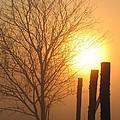 Foggy Pillars by Dale Kauzlaric