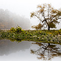 Foggy Reflections Landscape by Debra and Dave Vanderlaan