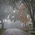 Foggy Street by Elena Elisseeva