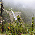 Foggy View From Icefields Parkway by Teresa Zieba