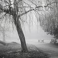 Foggy Willow by Christopher Rees