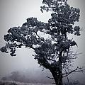 Foggy Winter I by Rebecca Basden